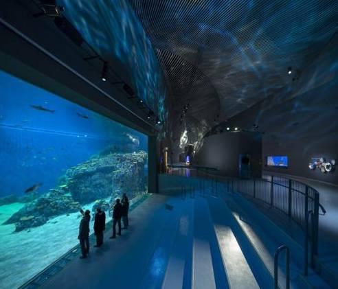 壁纸 海底 海底世界 海洋馆 水族馆 游戏截图 492_421